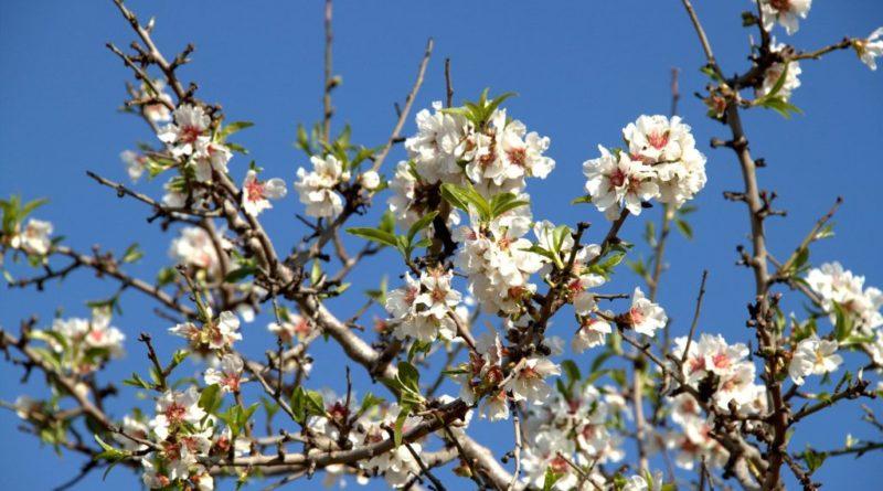 freddo gelo vento Coldiretti frutti in fiore
