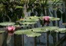 Il Giardino Botanico Comunale di Alessandria riapre lunedì 6 luglio